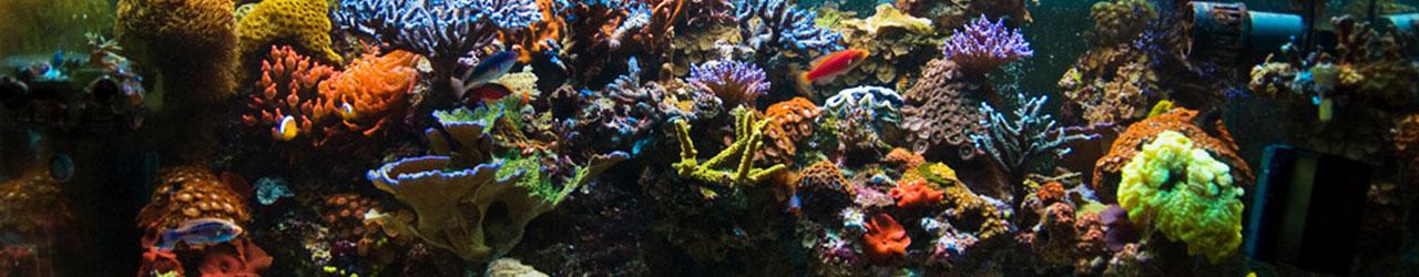 Calgary Aquarium Society